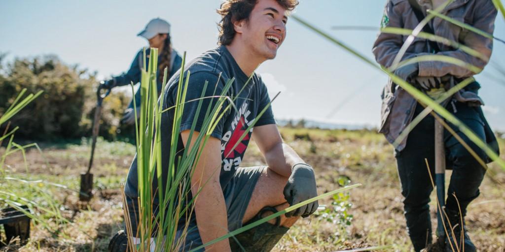 Planting - EcoZip